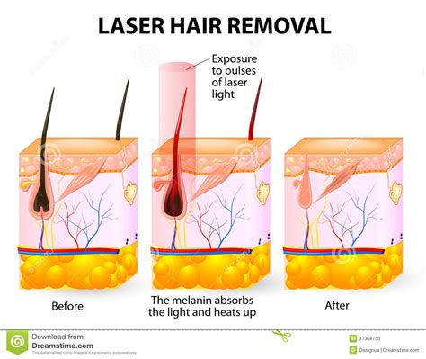 diagram of how oil penetrates skin picture 9
