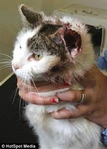 treating a cat skin torn picture 1