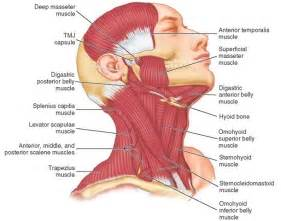 muscle pain neck pain and joint pain picture 1