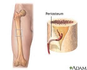 broken bone and blood flow picture 11