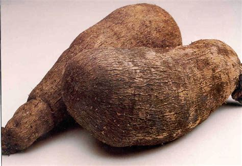african flaccid penis crop picture 13