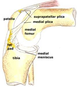 plica knee joint picture 1