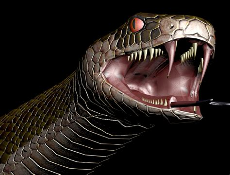 actual pictures of snakes teeth picture 14