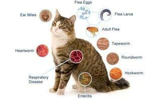 symptoms of bladder infection in cats picture 2