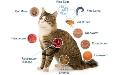 feline bladder disorders picture 18