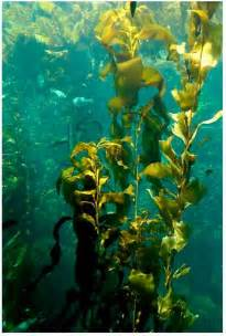 seaweed picture 9