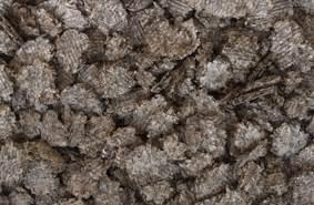 beet root fiber picture 7
