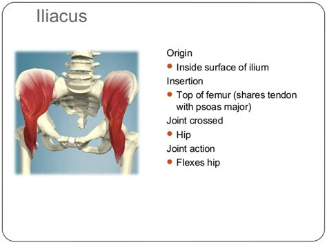 abdominal muscle pulls picture 6