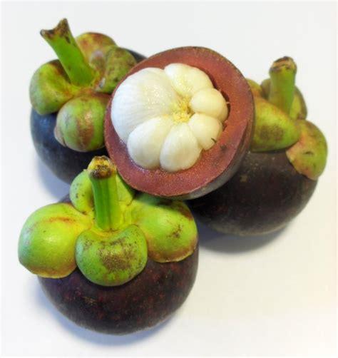 garcinia mangostana extract picture 9