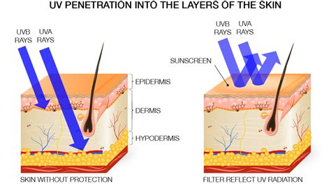 diagram of how oil penetrates skin picture 1