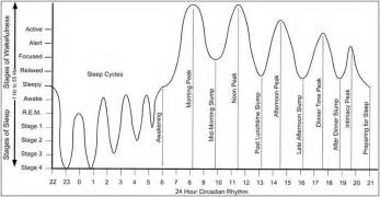 circadian sleep rhythm picture 15
