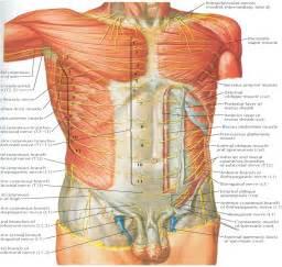 improve skin tome in abdominal area picture 2