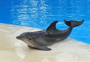 dolphins sleeping habits picture 5