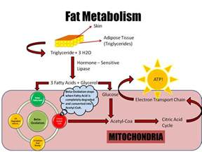Cholesterol fat picture 3