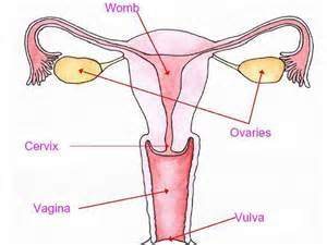diagrams of differnt positions of penis in vagina picture 2