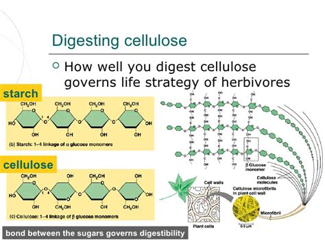 digestion of cellulose in termite gut picture 6