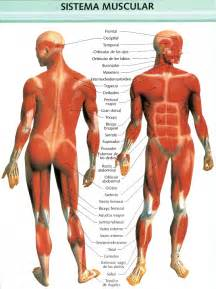 muscle excercises picture 11