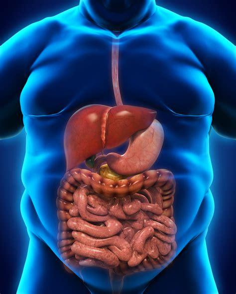 diet irritated bowel flora picture 11