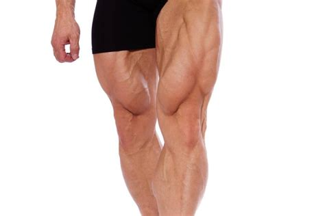 muscle building supplement picture 5