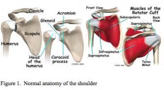 diagnose shoulder muscle tear picture 19