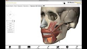 facial anatomy lips picture 7