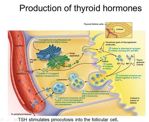 super high thyroid hormone picture 5