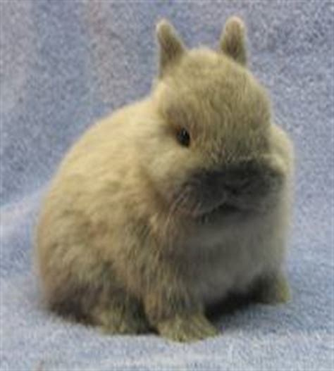 bunnies diet picture 3