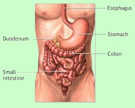 colon clean picture 3