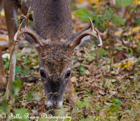 can deer antler help to grow a bigger picture 9