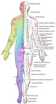 back ache leg pain picture 5