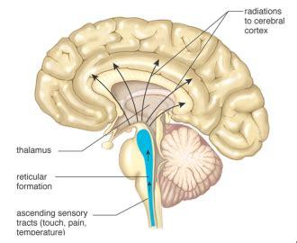 cerebral blood flow autoregulation picture 14