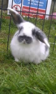 baby bunnies diet picture 9