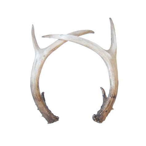 antler picture 2