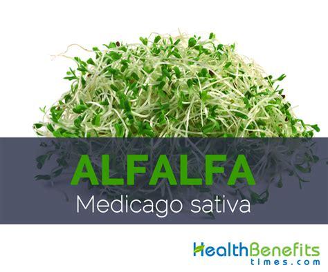 alfalfa facts picture 9