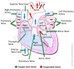Galvanic current blood flow circulation picture 3