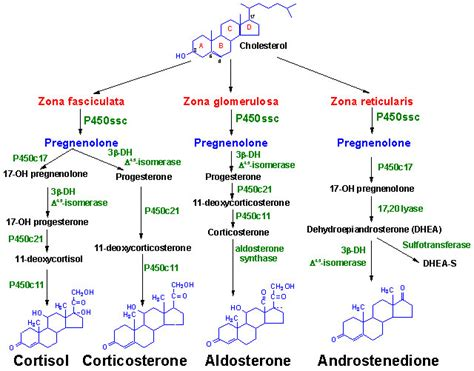 are estrogen and testosterone steroid hormones picture 1