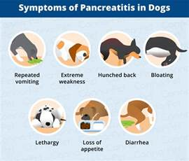 canine diet pancreais picture 3