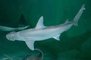 aquarium teeth picture 14