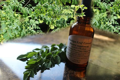 hw do one locally use herbs like moringa picture 3