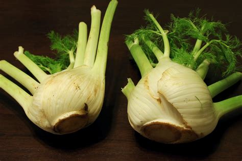 when to pick fennel picture 6