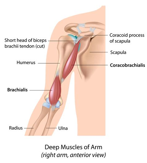 muscle ache joint pain picture 13