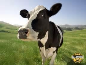 bovine h picture 6