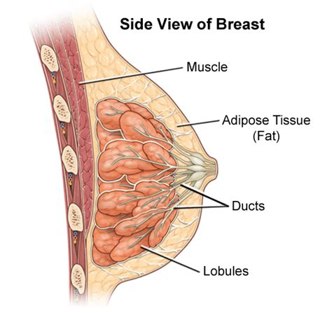 joint pain after breast enlargement herbs picture 25