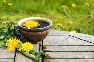dandelion tea picture 11