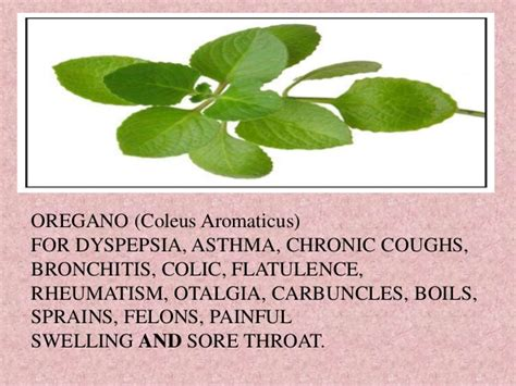 about development of male philippine herbal drug picture 10