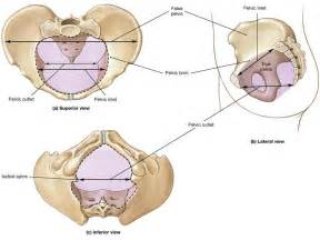 el movements and prostate picture 2