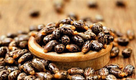 castror oil picture 3