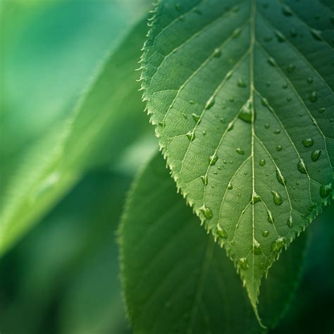 green leaf picture 7