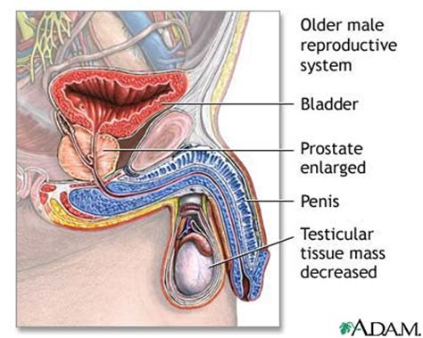 question on aging of the reproductive sysyem picture 9