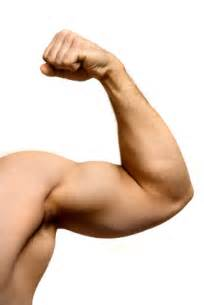 what is the definition of muscle strength picture 19